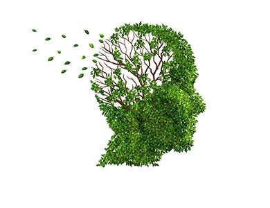 dementia image shoiwng leaves being blown from a head-shaped hedge